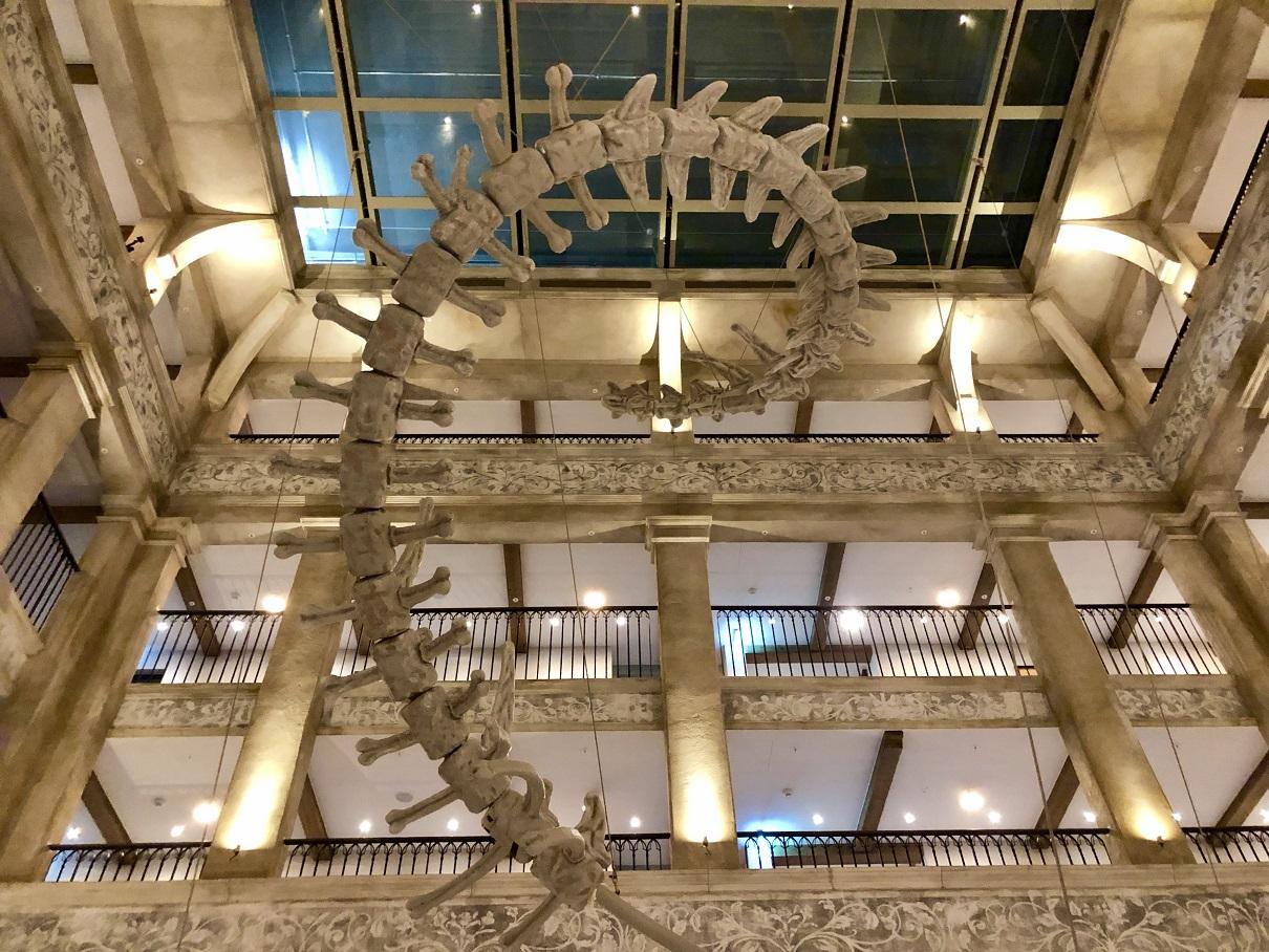 Aus 21 Metern Höhe schwingt sich das Skelett der Svalgur die Eingangshalle hinab