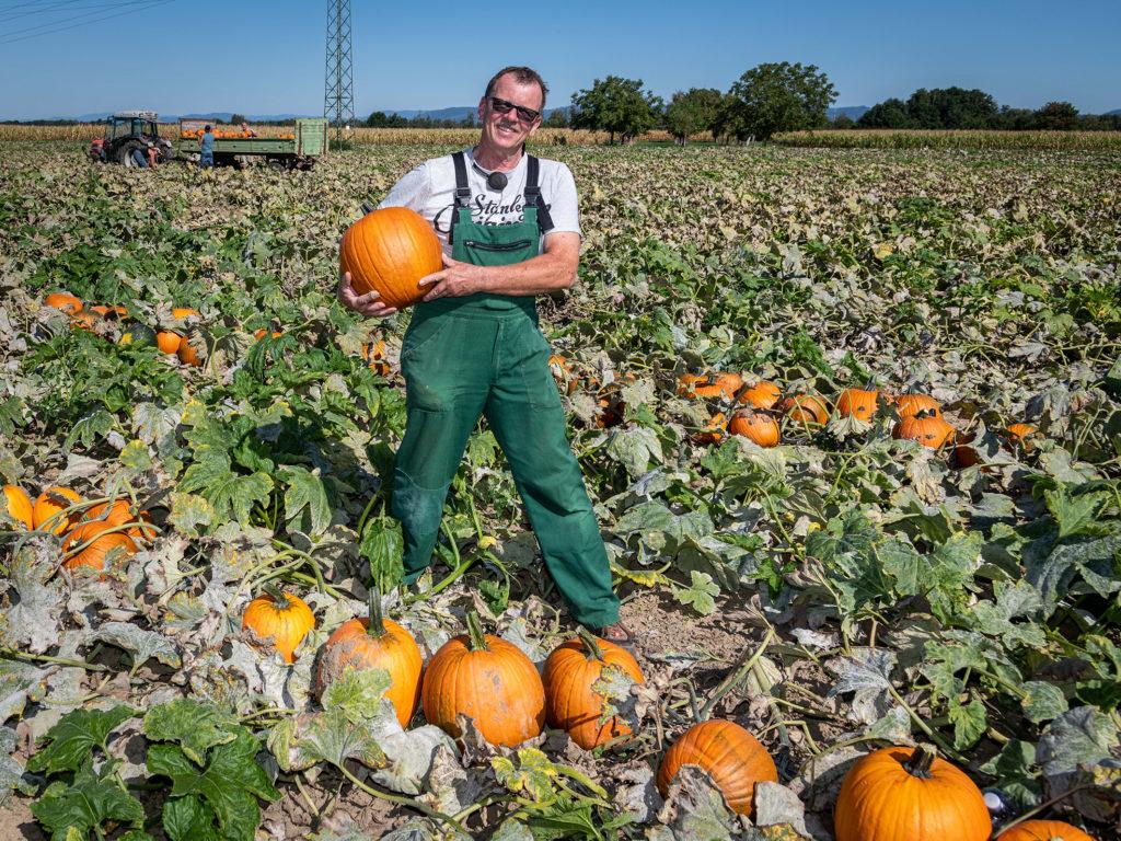 Depuis 25 ans, c'est Peter Rauer, un agriculteur de Schwanau-Wittenweier qui fournit les citrouilles.