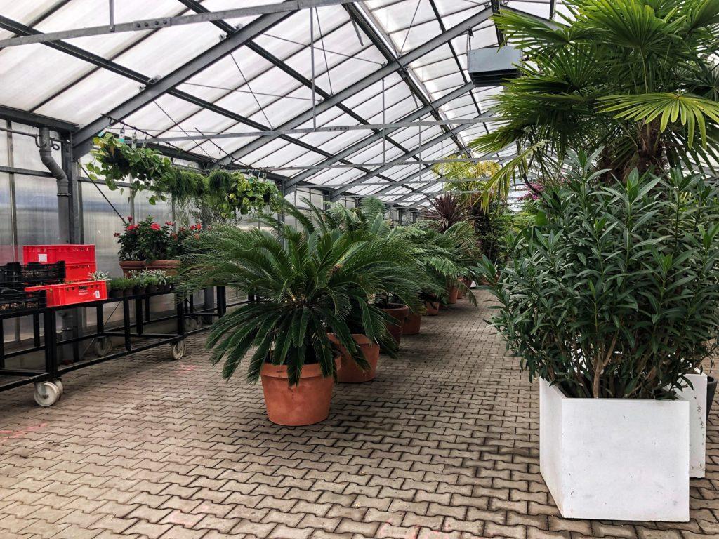 Les plantes sont protégées du froid hivernal dans les serres à proximité directe du parc.
